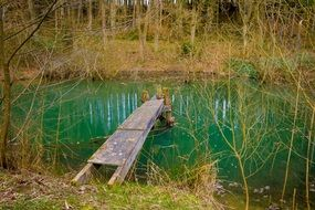 wooden bridge on a pond in the forest