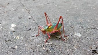 grasshopper on the asphalt path