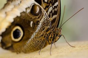 brown butterfly in the wild close up