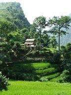 Beautiful and picturesque, green landscapes in Annapurna, Nepal