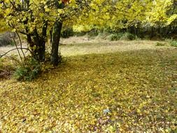 yellow leaves under a tree in autumn