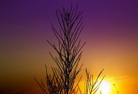 landscape of Eastern plant on sunset background