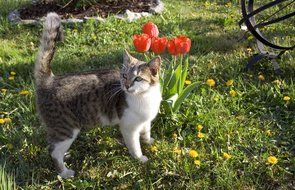 Cat and colorful flowers in the garden