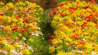 colorful flower beds