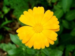 cute yellow flower