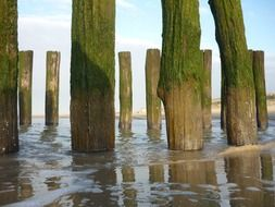 old wooden piles in water
