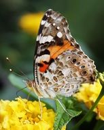 butterfly on a yellow flower on a plant
