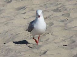 white seagull on the sand on the beach