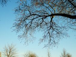 tree branches in the blue sky