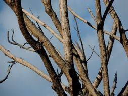 dry branches of tree