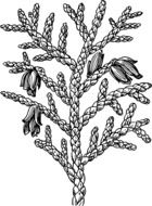 black and white drawing plants with buds