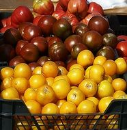 brown and yellow tomatoes