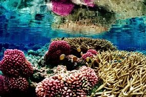 reefs and corals in the underwater world