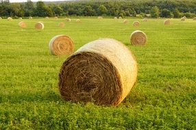 straw bales on a green field