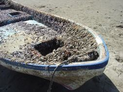 old fishing boat in clams