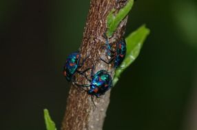 shiny beetles on a tree trunk