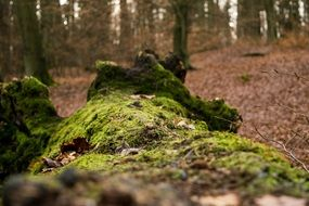 Green moss in autumn forest