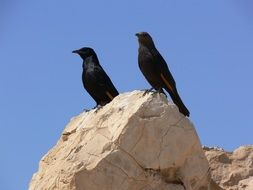 black birds on a rock against the blue sky