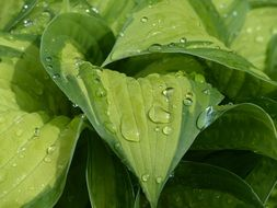 drops of water on green leaves of a plant
