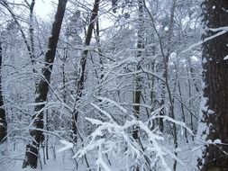 A lot of the white snow on the trees in winter