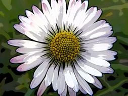 daisy flower inversed colors