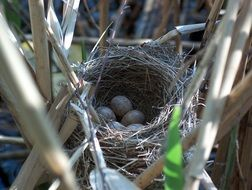 Picture of bird's nest