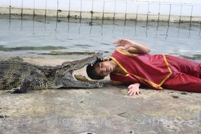 Dangerous show with a crocodile