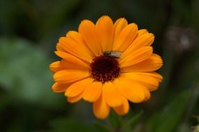 fly on the yellow flower