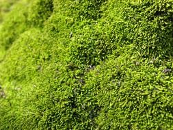 Green moss close up