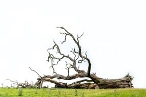 fallen tree on a green meadow