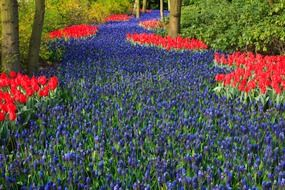 beautiful tulip and iris garden in Netherlands