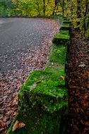 landscape of stone fence in green moss in forest