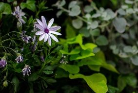 purple flowers among green leaves