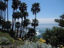palm trees on ocean coastline