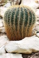 wonderful botanical cactus