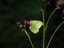 green butterfly on a plant