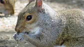Close up picture of the squirrel