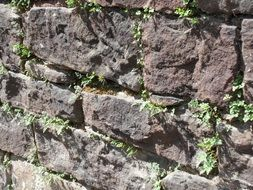 Plants on the sandstone wall