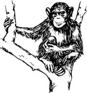 chimpanzee drawing on a tree