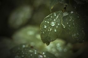 closeup photo of the water drops are on a leaves