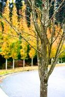 autumn trees on the road