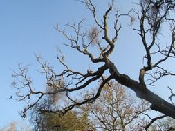 big branches of a leafless tree in india