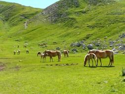 herd of horses in a meadow by the mountain