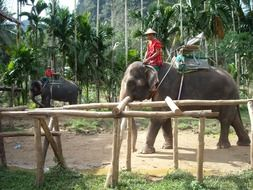 man on elephant in thai nature park