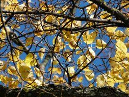 autumn leaves on tree branches against the sky