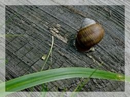 brown snail on a tree