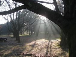 sunbeams in the morning forest