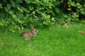 nature wild rabbit