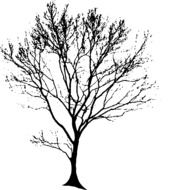black leafless tree silhouette