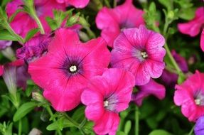 bright pink flowers in summer